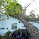 Fallen trees mean roof damage for you